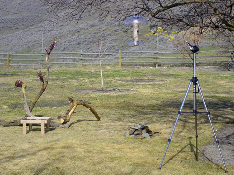 Fotografía del pájaro del patio trasero | Fotografía de Kevin Davis