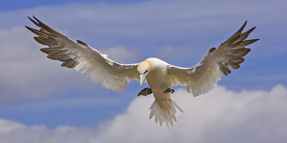 Ngannet